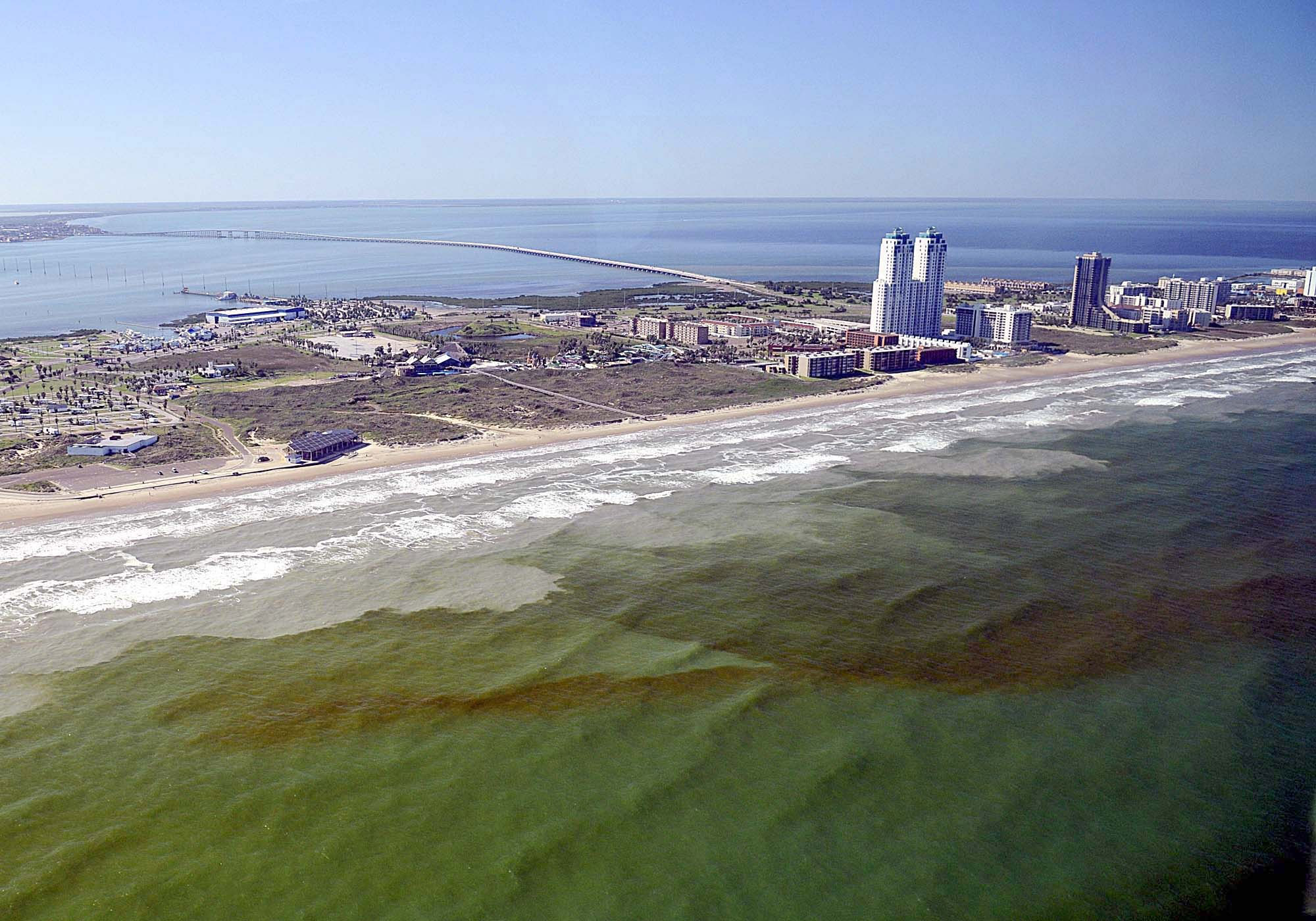 Blooms of harmful algae like this one off the coast of Texas