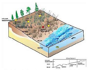 Schematic of a generic marsh restoration site.